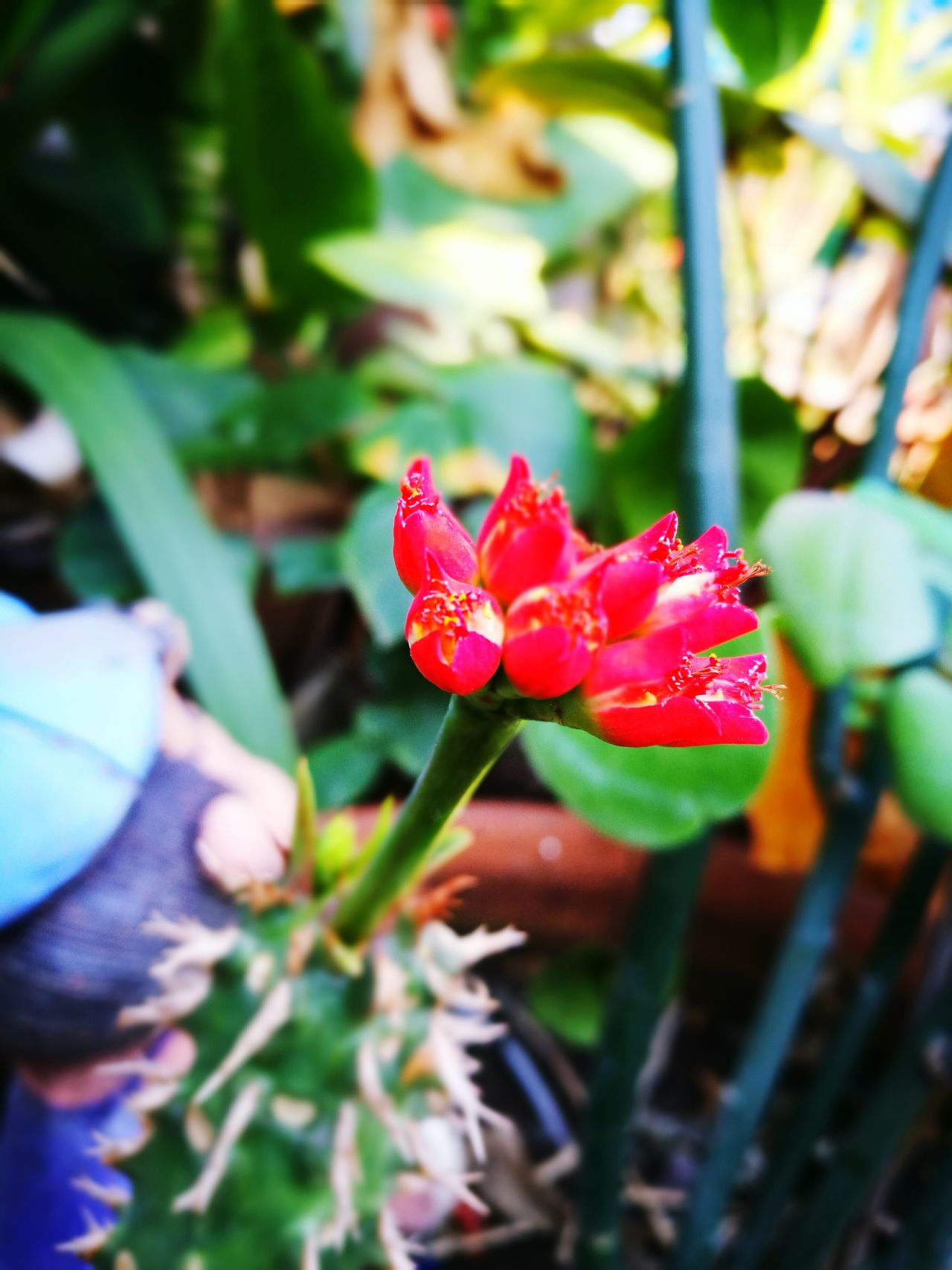 Flower Red Growth Nature Beauty In Nature Plant Flower Head Petal Close-up Leaf Day Freshness Fragility Outdoors No People
