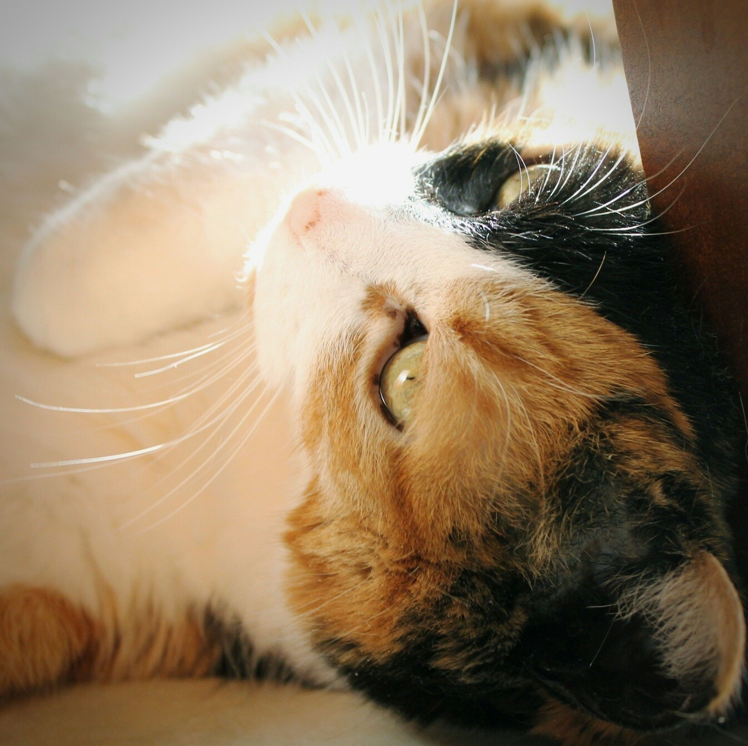 animal themes, one animal, mammal, domestic animals, pets, indoors, animal head, close-up, animal body part, whisker, domestic cat, feline, relaxation, part of, cat, focus on foreground, resting, looking away, lying down, portrait