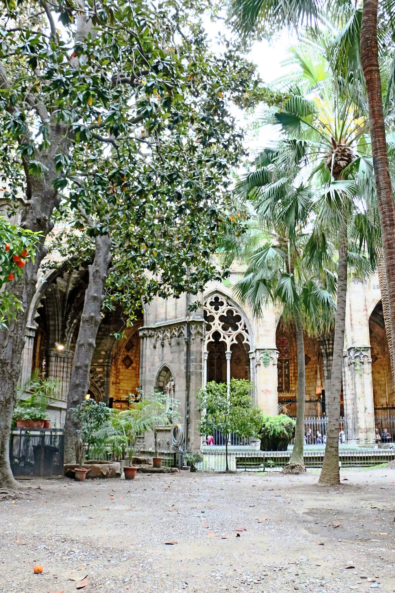 Arch Architecture Barcelona, Spain Building Exterior Built Structure Cloister Day Gotic Cathedral Outdoors Palm Tree Tree