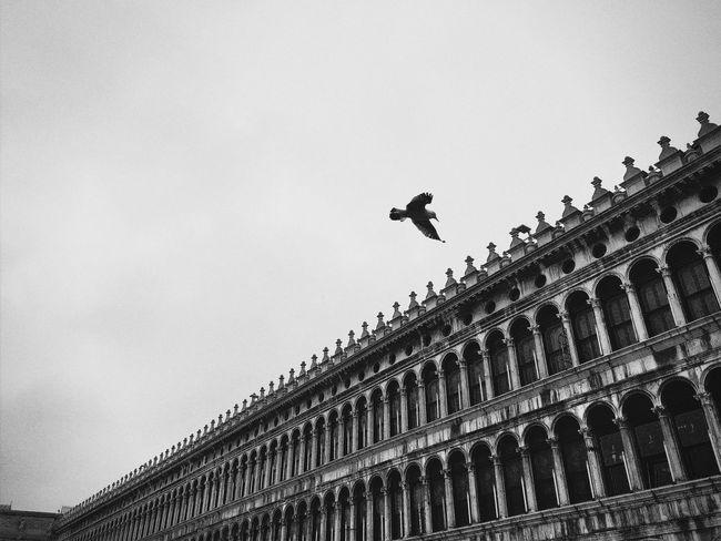 Visual Witness Hipstography EyeEm Traveling Around The World EyeEm In Venice Hipstamatic ShotoniPhone6s Shootermag Showcase: May The Architect - 2016 EyeEm Awards Blackandwhite My Own Style Of Beauty