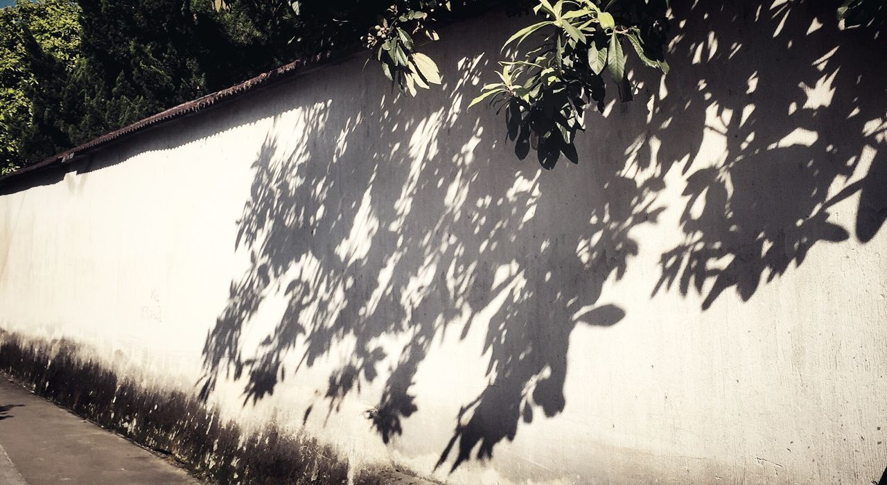 The Street Photographer - 2017 EyeEm Awards Shadow Sunlight Day Outdoors Tree High Angle View Nature No People Growth Plant Beauty In Nature Water Animal Themes Sky