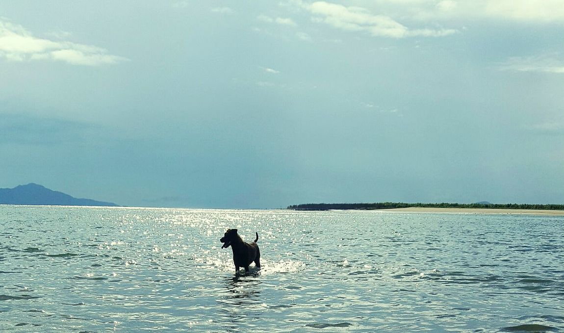 One Animal Animal Themes Water Nature Sea Dog Swimming Beauty In Nature Sky Silhouette Outdoors No People Adventure Cloud - Sky Scenics Day Sea Life North Queensland MariNelson Breathing Space Lost In The Landscape
