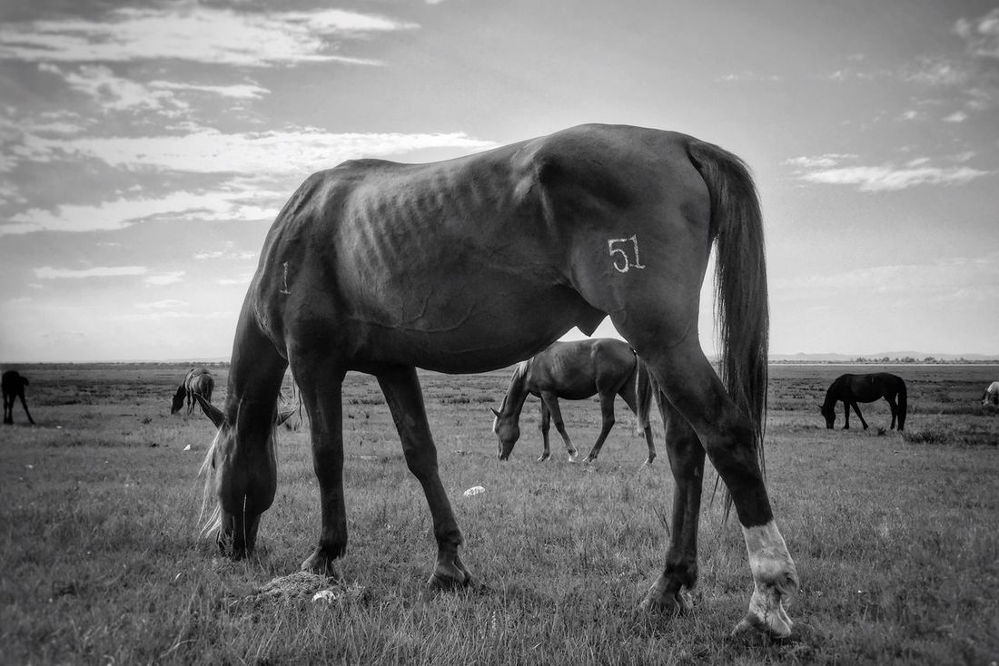 Horse Horses Check This Out Hanging Out Hello World Cheese! Relaxing Taking Photos Enjoying Life TheWeekOnEyeEM EyeEm Best Shots - Black + White EyeEmBestPics EyeEm Best Shots EyeEm Gallery EyeEm Best Edits Blackandwhite Photography Black & White Black And White Photography My Favorite Photo Taking Photos (null)Hello World Relaxing Prairie EyeEm