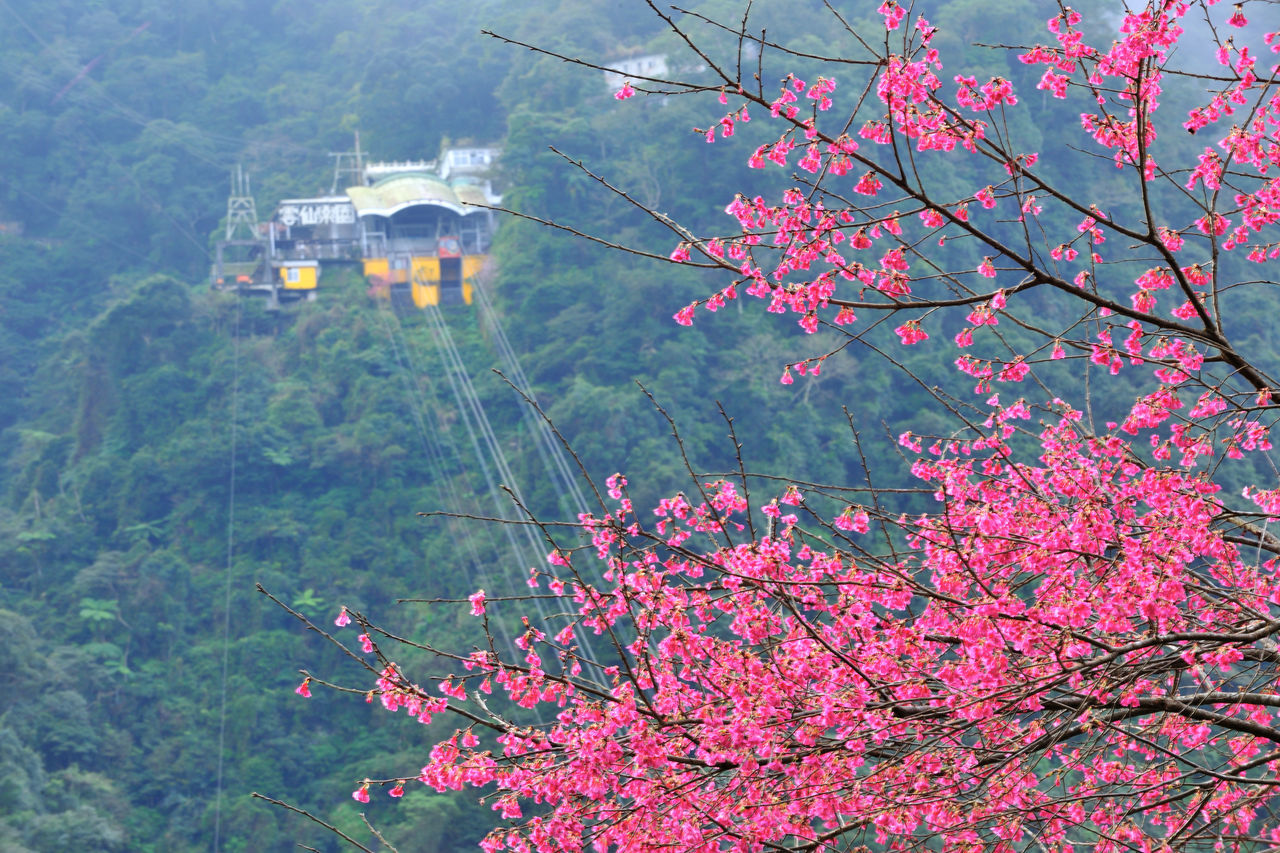 Architecture Beauty In Nature Branch Building Exterior Built Structure Cable Car Cherry Blossoms Day Flower Go Sightseeing Green Color Growth Hanging High Altitude Landscape Mountain Nature No People Outdoors Plant Taiwan Tourism Travel Travel Destinations Tree