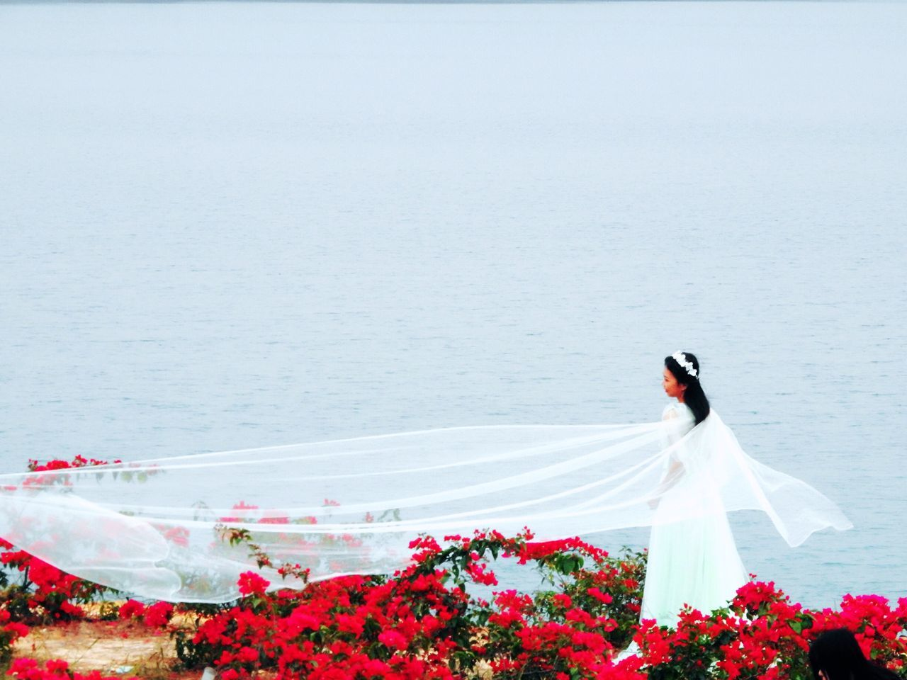 nature, water, beauty in nature, day, sea, wedding, flower, outdoors, no people, wedding dress