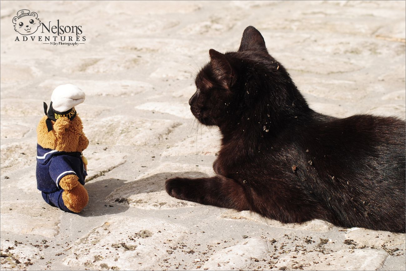 Nelson and Jacky NelsonsAdventures Cat CDRE Cats Taking Photos Teddybear Pets Animal