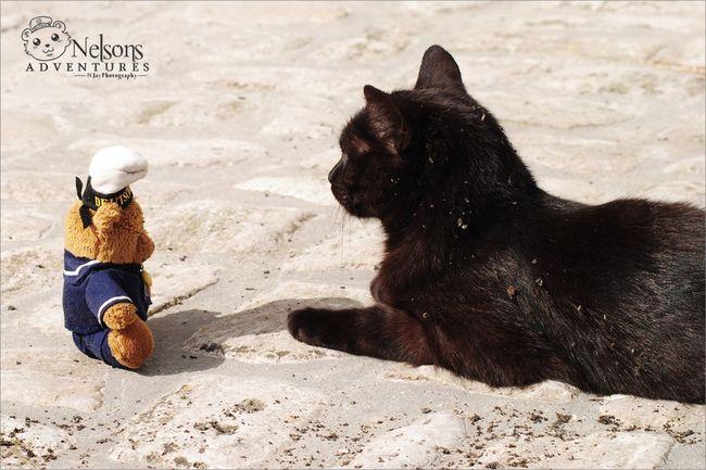Nelson and Jacky NelsonsAdventures Cat CDRE Cats Taking Photos Teddybear Pets Animal