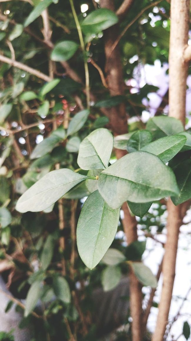 Leaf Plant Plants Green Nature Small Tree