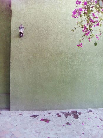 Textured  No People Day Photography Plants And Flowers Decorations Green Color Tranquility Classic Comonfort Guanajuato My Photography My Day <3 LOL!