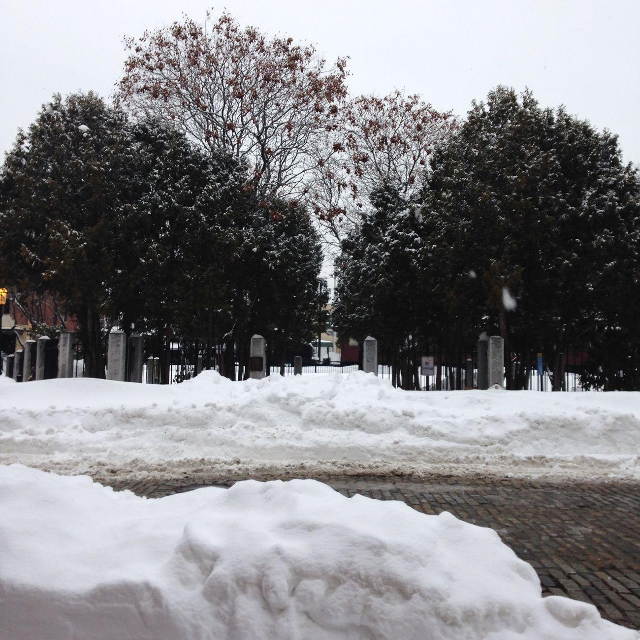 Winter Juno
