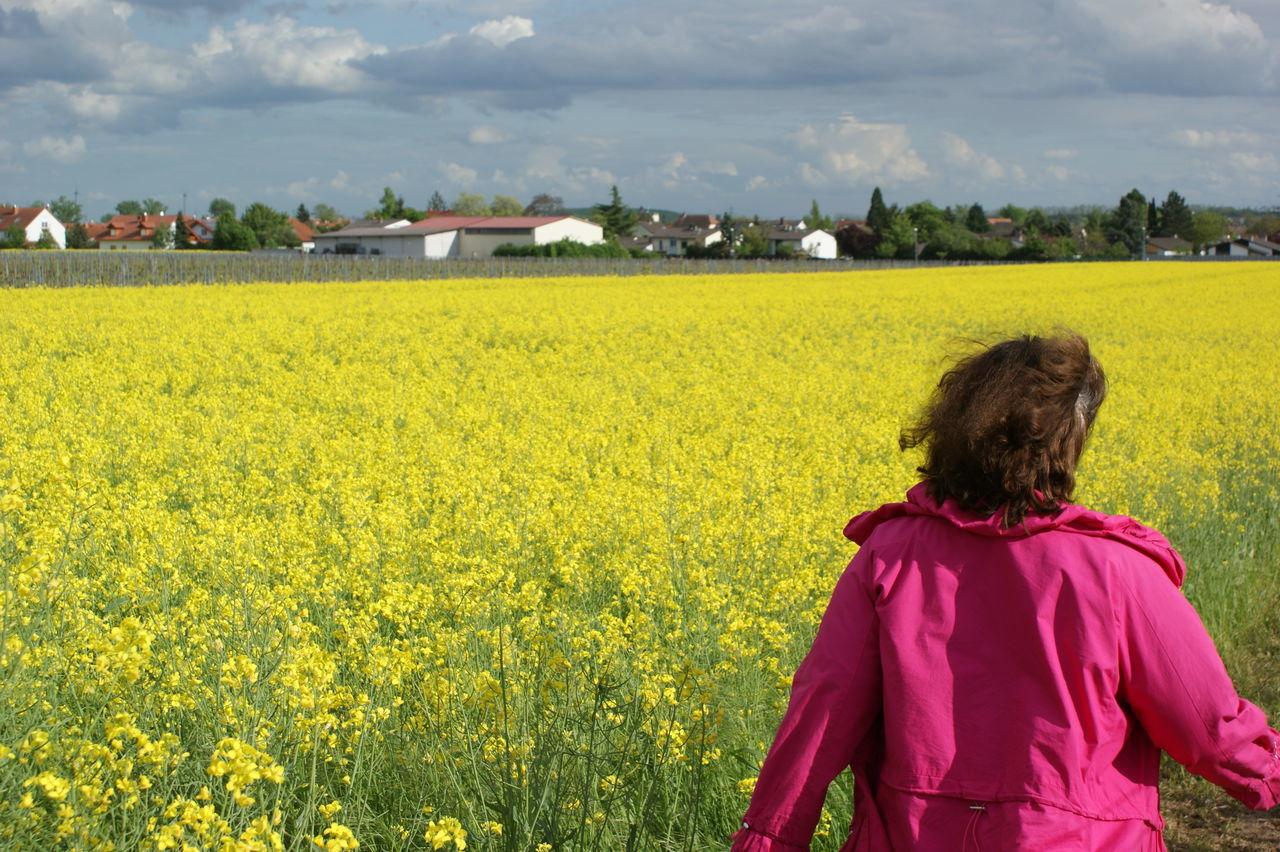 Carefree European Flower Field Field Field Of Flowers Flower Field German Flowers Yellow Yellow Flower Field Yellow Flowers