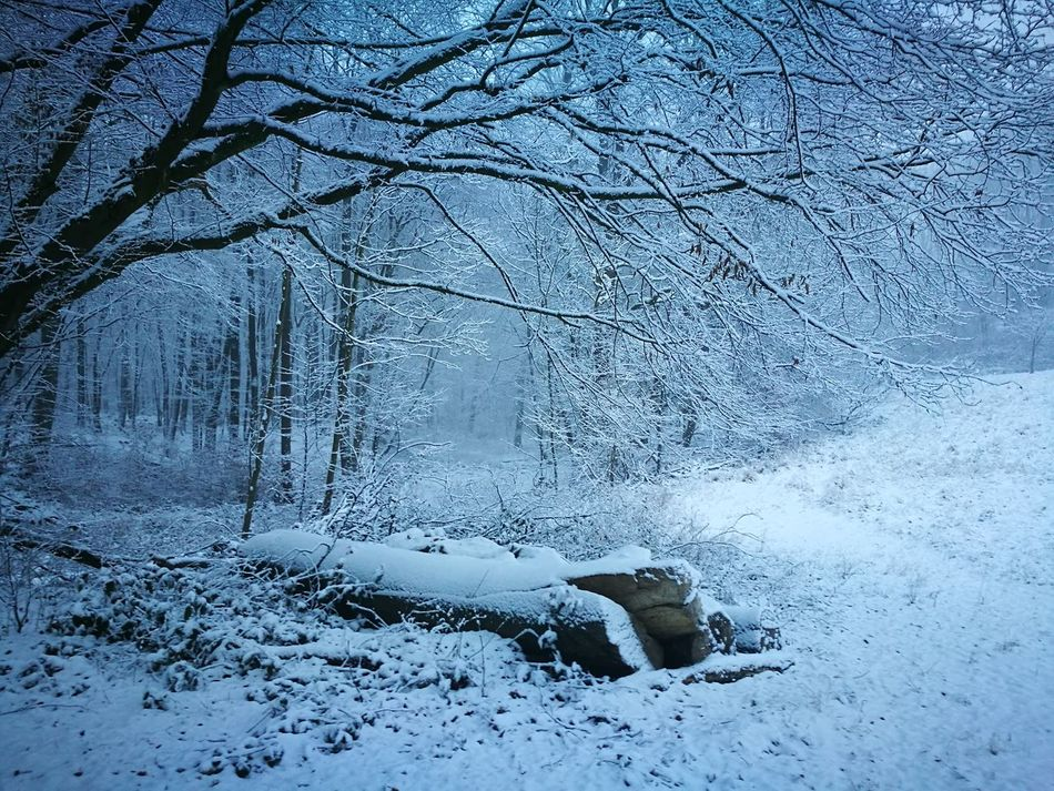 Cold Temperature Winter Snow Tree Nature Beauty In Nature Day Outdoors