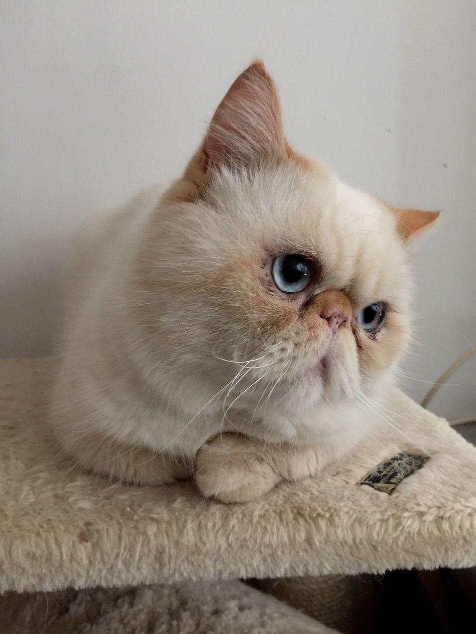 Faces Of EyeEm Face Cute Pets Animals Cute Cats Cat Catsofinstagram Cats Cat♡ Cat Lovers