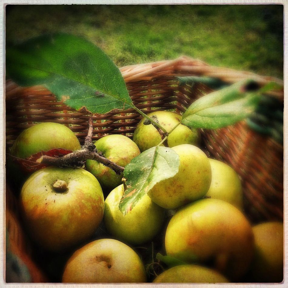 Harvest Apples Autumn Food Healthy Eating Abundance Green Color Large Group Of Objects Still Life Healthy Lifestyle Tranquil Scene Nature_collection EyeEm Nature Lover Eyem Nature Lovers  Nature Beauty In Nature Tranquility Freshness Fruit