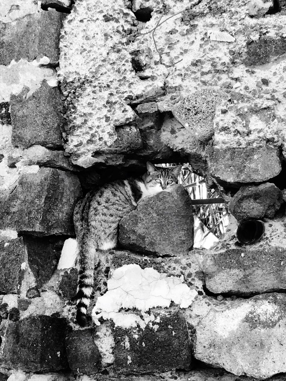 Mimetismo.... Nature Outdoors Stone - Object No People Day Lifestyles Animals In The Wild Animals Animal Behavior Close-up Architecture Blackandwhite Black And White Adapted To The City Mimetism Cat Recovery Selvatic