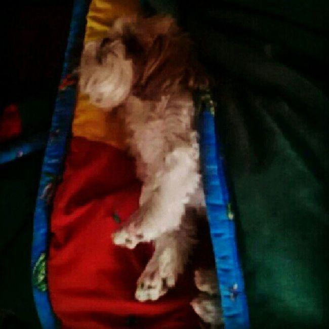 Bundledup in my Blanket WakingUp Stretching blanketstealer lovemypets