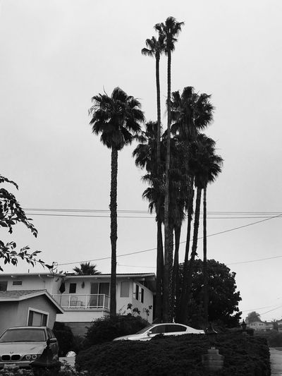I love palm trees my town SoCal