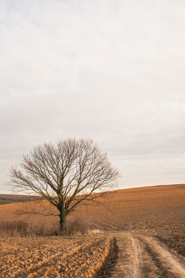 Bare Tree Beauty In Nature Branch Cloud Countryside Day Diminishing Perspective Dirt Road Field Horizon Over Land Landscape Long Nature Non-urban Scene Outdoors Plowed Field Remote Rural Scene Scenics Single Tree Sky Solitude The Way Forward Tranquil Scene Tranquility