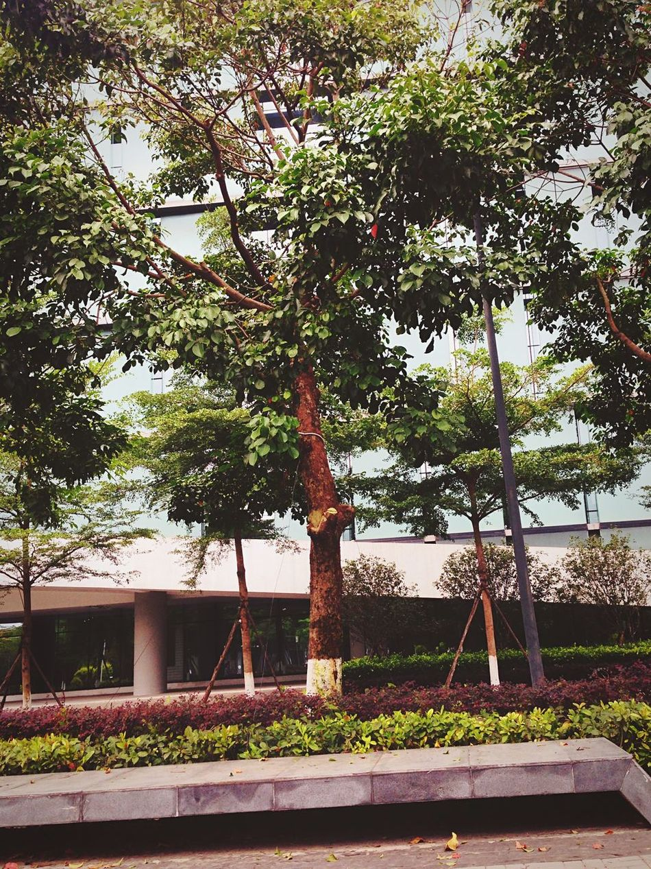 My school For China