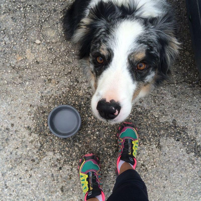 Running Canicross Salomon My Dog