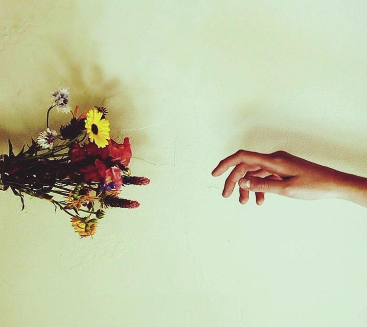 Flowers The Explorer - 2014 EyeEm Awards My Lifee Be Likee Hard Life..