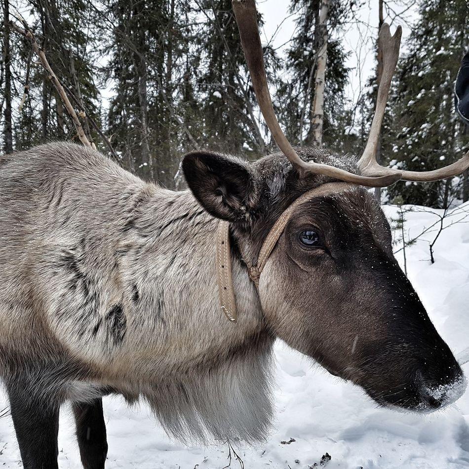 Animal Themes Nature Rennes Suède Sweden