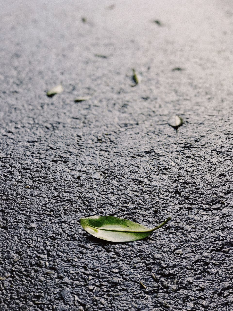 High Angle View Of Leaf On Wet Road