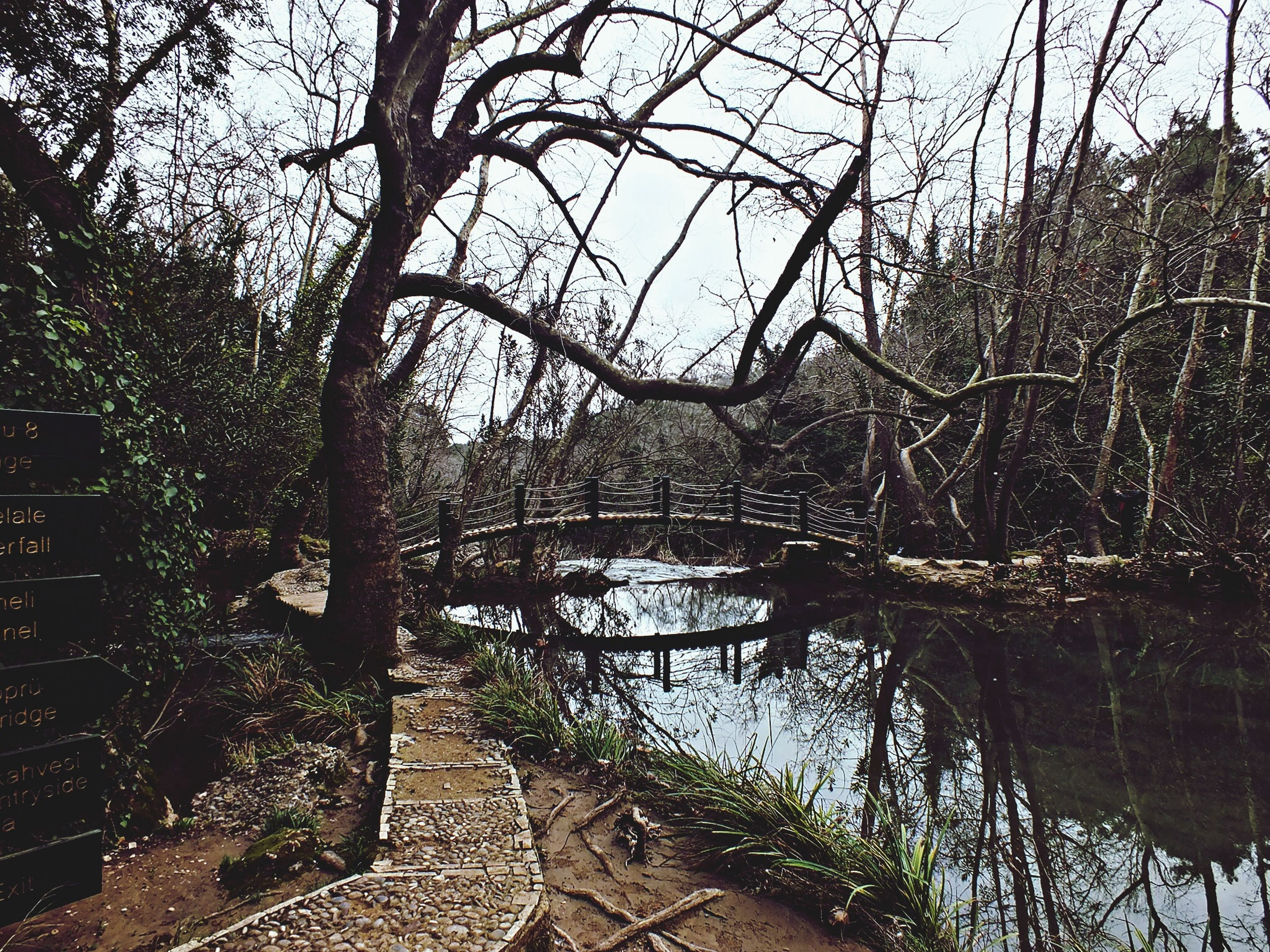 tree, water, branch, bare tree, tranquility, built structure, lake, nature, tranquil scene, sky, architecture, scenics, railing, day, river, reflection, the way forward, outdoors, growth, no people