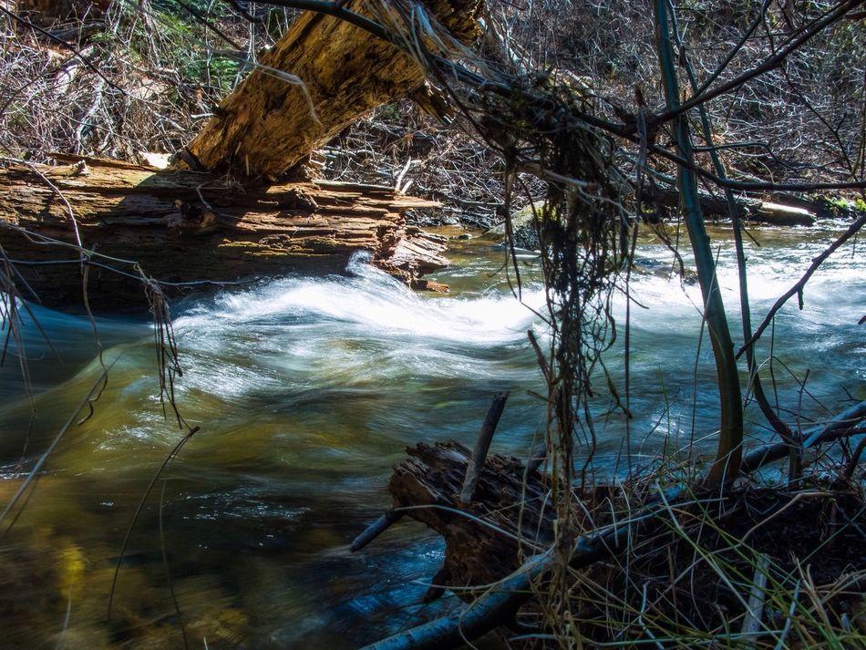 Water River Canon Canon Powershot G9 Photoshopexpress Slow Shutter Sierra Nevada California Stanisluas National Forest Jenness Park Mountains Rapids Logs Forest