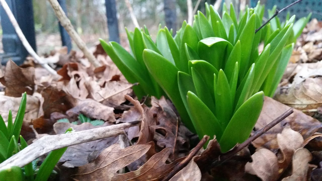 green color, growth, leaf, nature, plant, no people, close-up, day, outdoors, freshness, fragility, beauty in nature