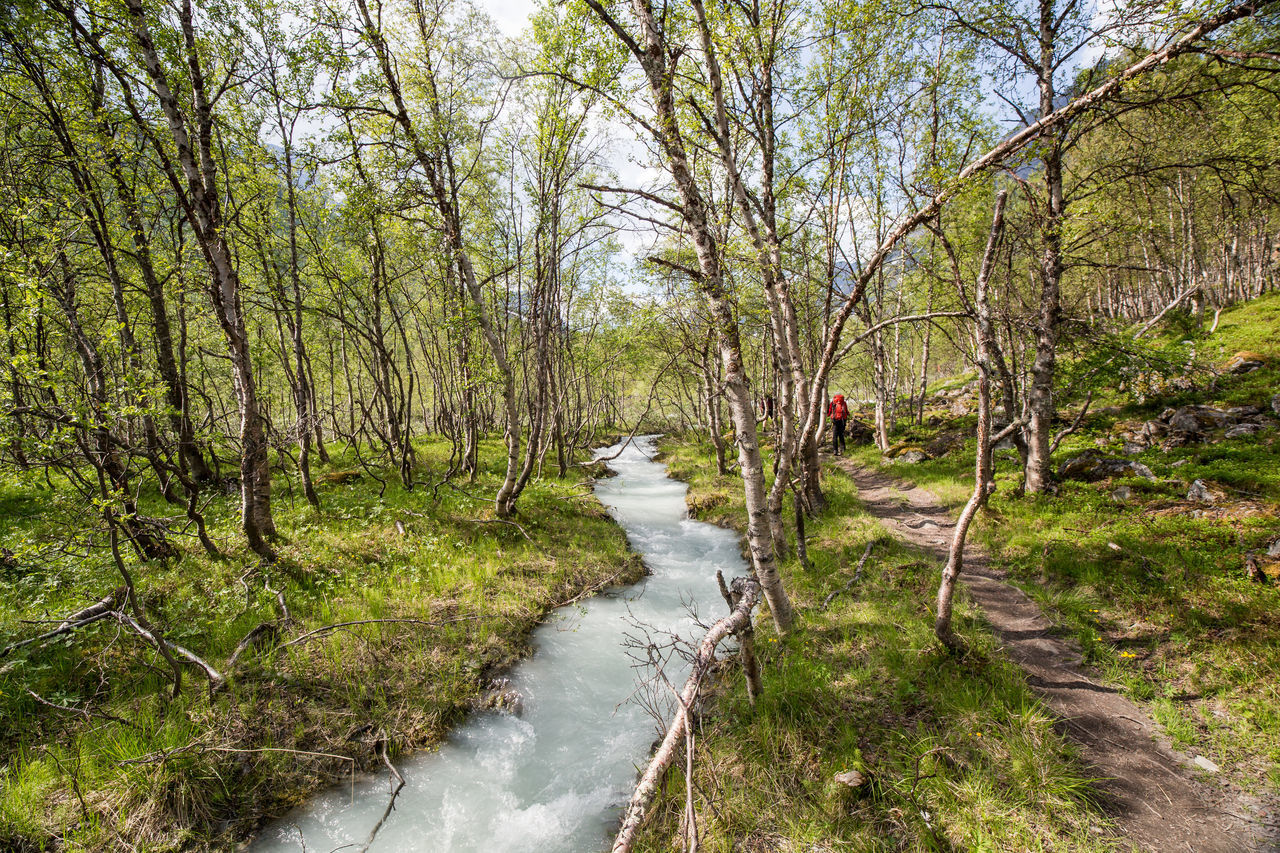 Adventure Beauty In Nature Branch Cold Temperature Day Flowing Water Forest Glacier River Grass Growth Hiking Landscape Nature No People Norway Outdoors River Scenics Sky Tranquil Scene Tranquility Travel Destinations Tree Water