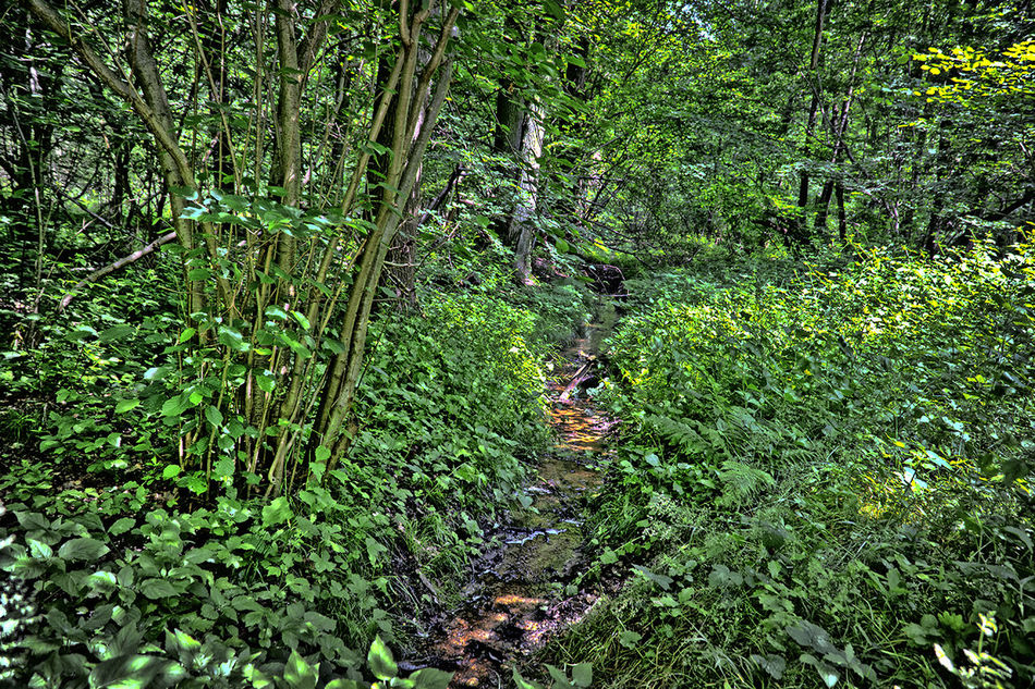 B Beauty In Nature Forest Grass Green Color Growth Landscape Nature Outdoors Plant Rinnsal Scenics The Way Forward Tranquil Scene Tranquility Wald Water WoodLand Wouden