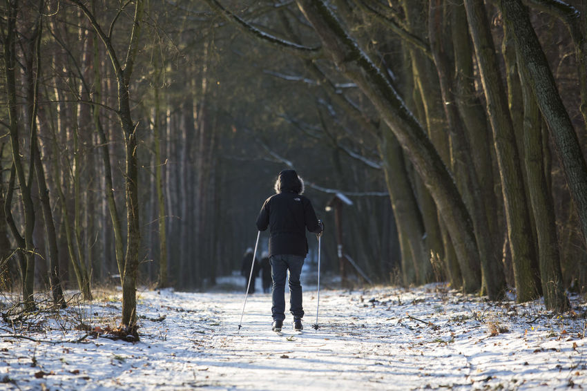 06.01.2017 The Stefan Starzyński Kabaty Woods Nature Reserve Cold Temperature Cross Country Skiing Daily Life Day Forest Kabaty Nature Nature Outdoor Activity Outdoors Park People Poland Reserve Snow Sport Starzyński Stefan Warsaw Winter WoodLand Woods