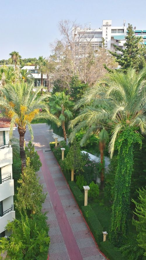 Hotel Sandy Beach Turkey Side Entranceway Palm Trees Flowers,Plants & Garden Beautiful Nature Greenery