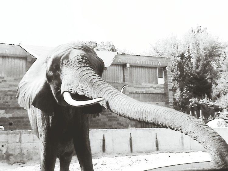 Elephant Castle Africa Animals