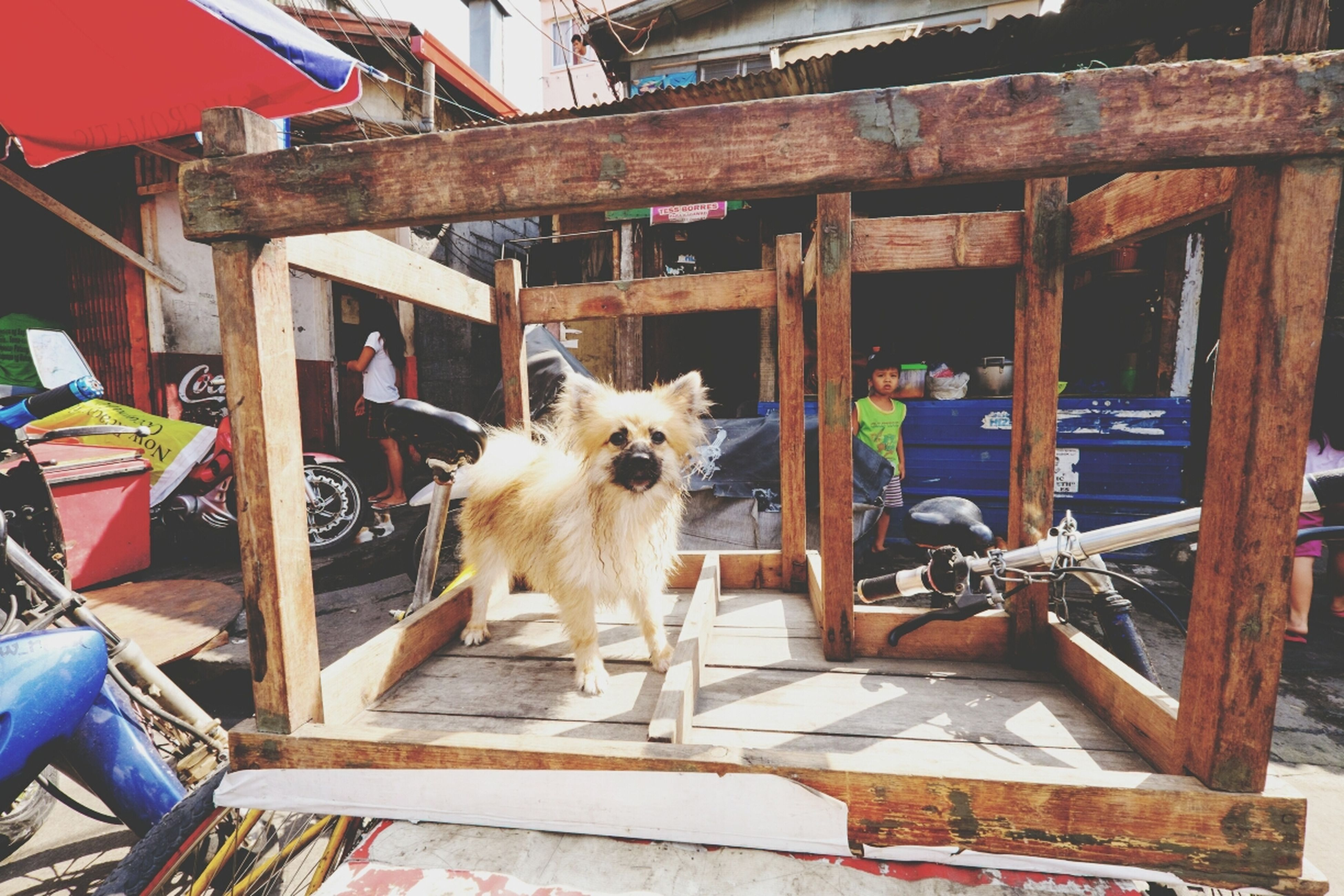 animal themes, one animal, domestic animals, mammal, wood - material, pets, built structure, sitting, wooden, railing, dog, full length, architecture, day, outdoors, wood, steps, standing, building exterior, domestic cat
