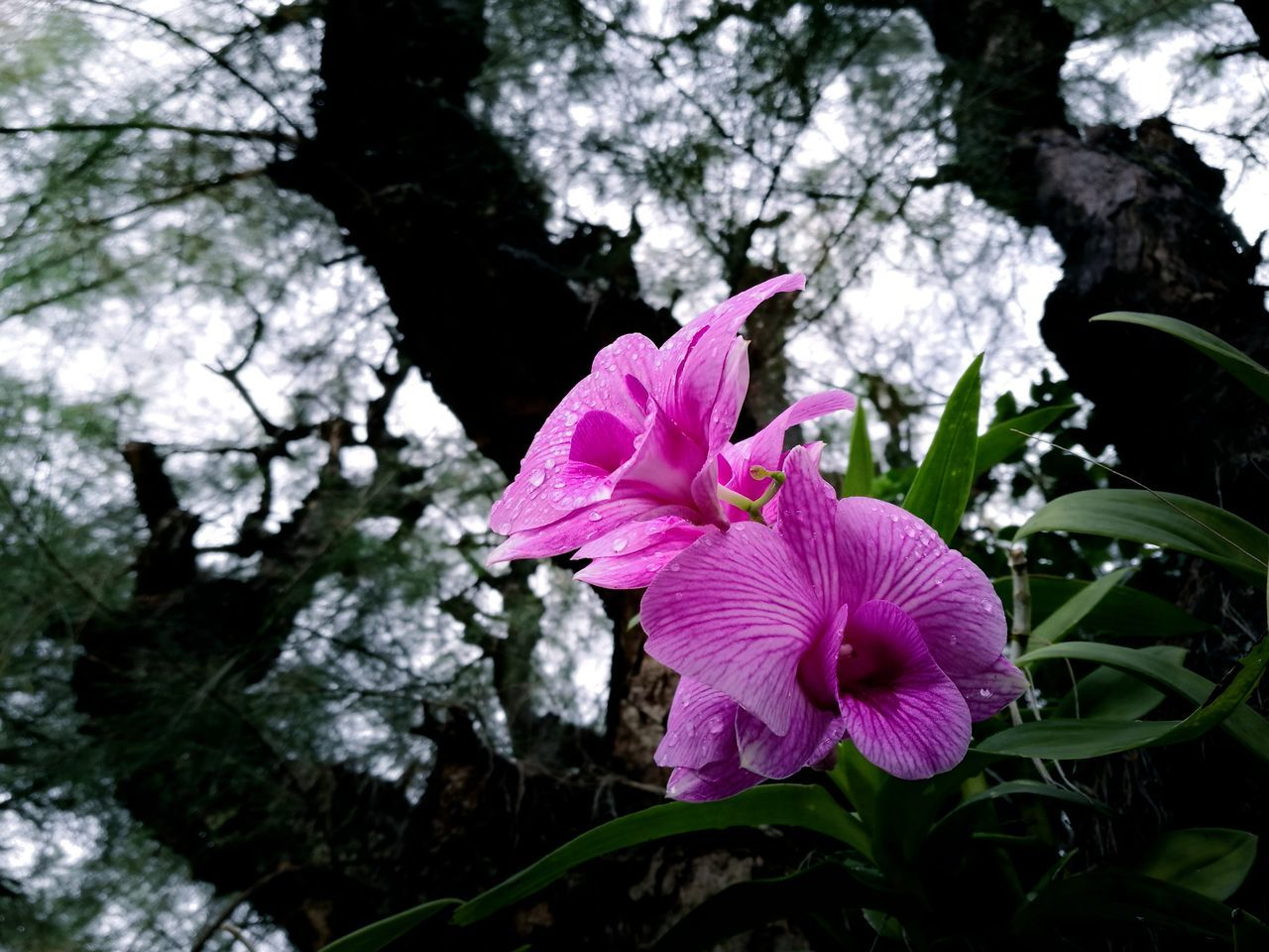 flower, fragility, petal, beauty in nature, growth, pink color, nature, freshness, day, flower head, blooming, no people, outdoors, tree, plant, close-up, petunia, periwinkle