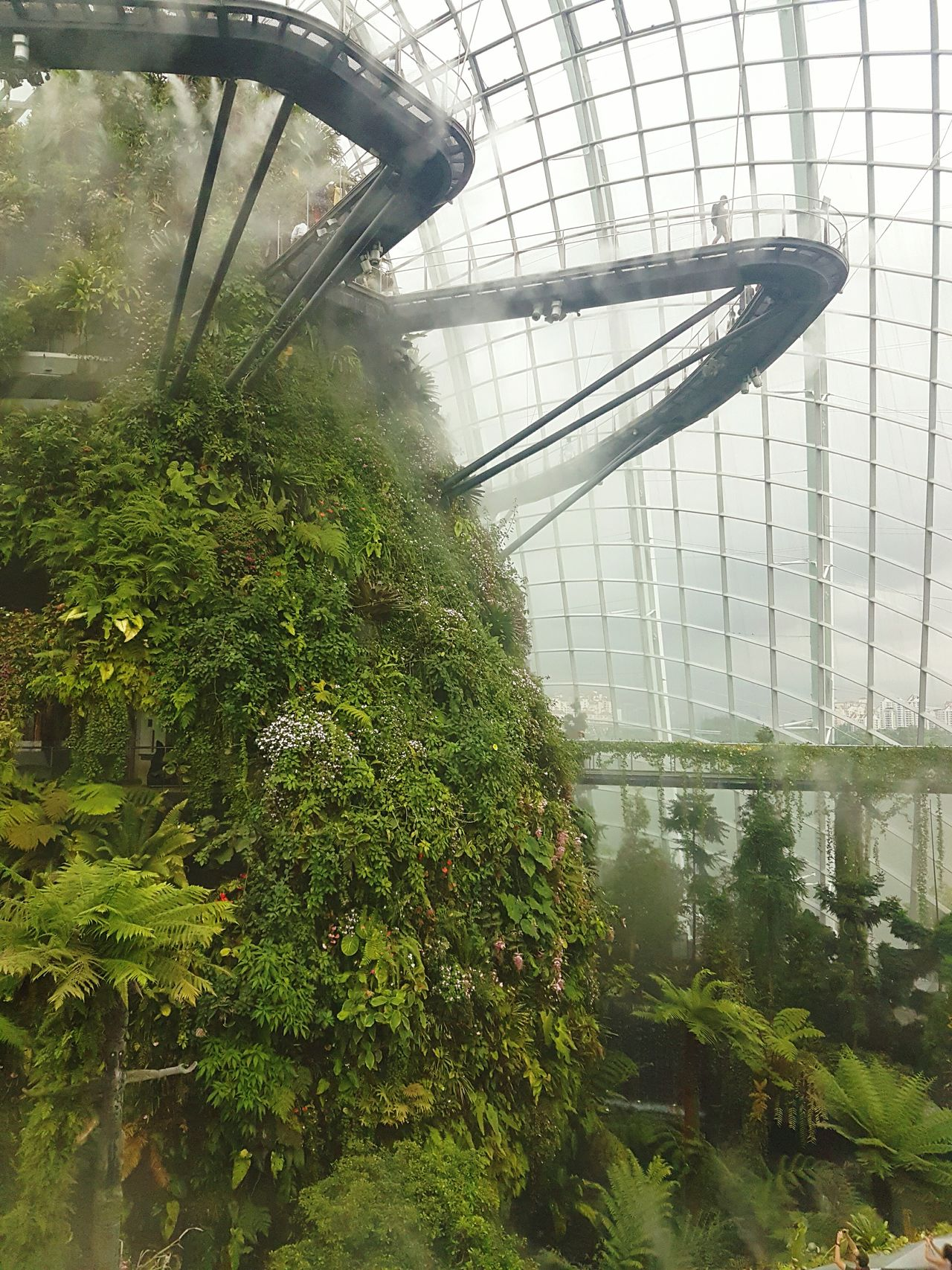 Rain on the outside, clouds on the inside Singapore Gardens By The Bay Cloud Forest Cloud Serenity Greenery S7 Edge