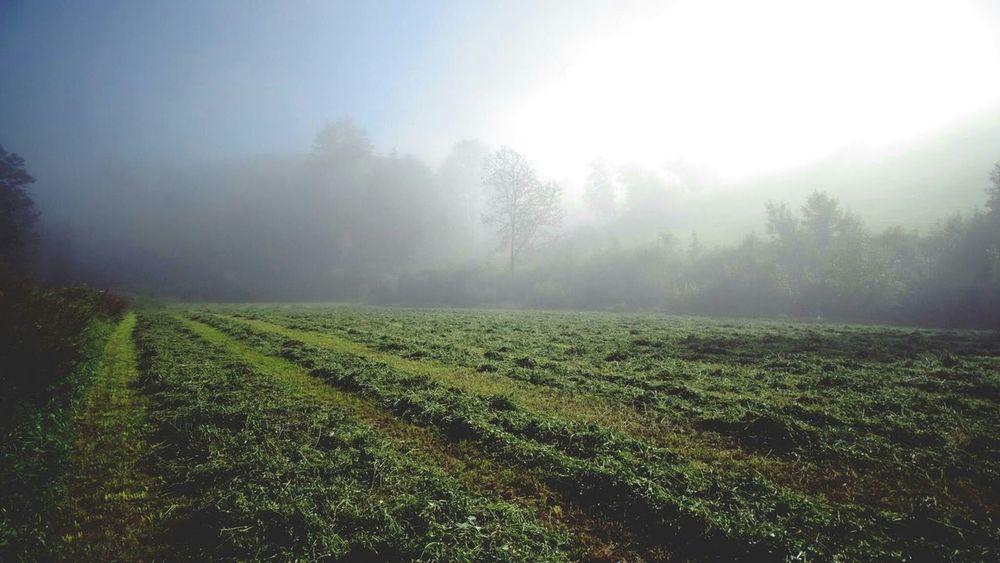 Sauerland Edge Of The World Foggy
