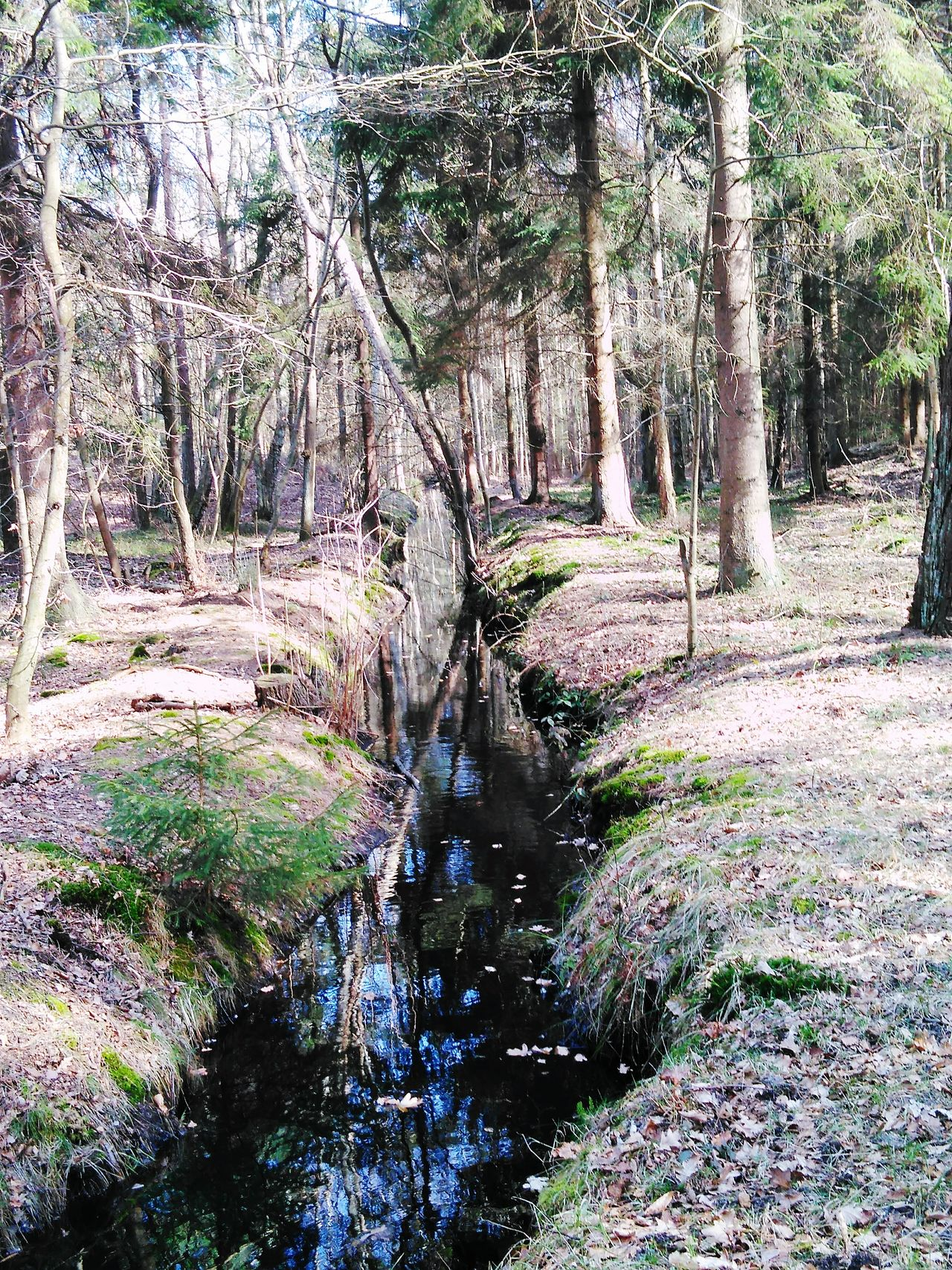 Forest Nature Day No People Beauty In Nature Nature Polend Scenics