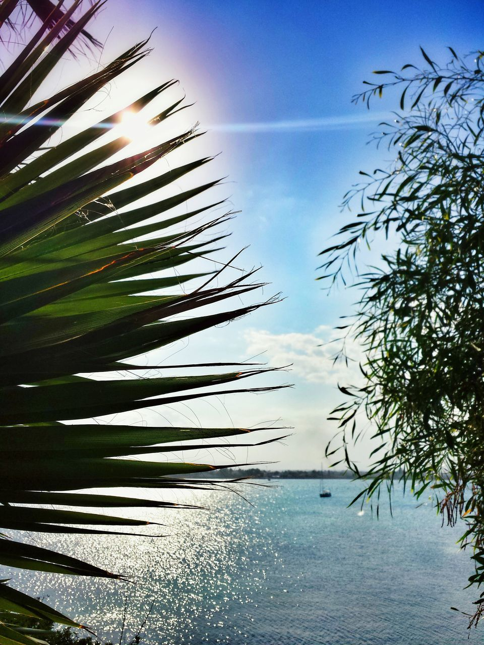 water, nature, sea, beauty in nature, tree, sky, scenics, no people, tranquility, tranquil scene, outdoors, day, horizon over water, sunlight, growth, blue, beach, palm tree, close-up