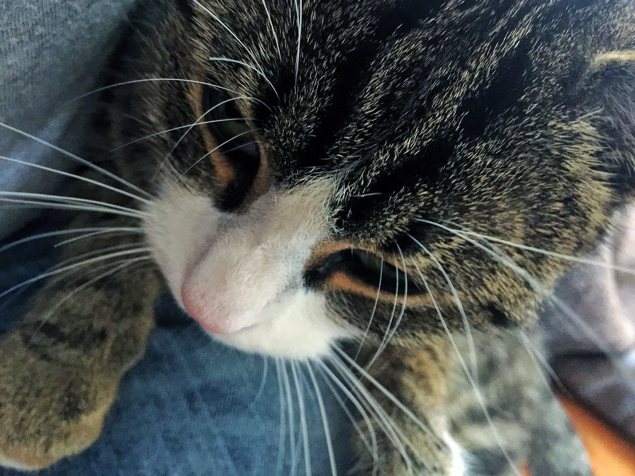 domestic cat, pets, one animal, domestic animals, whisker, animal themes, feline, mammal, close-up, cat, indoors, no people, day