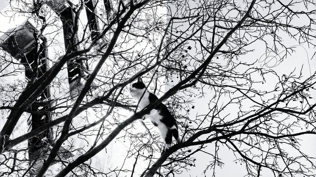 I'm like a bird, I only fly away... Cat Cat Lovers Catoftheday Cat Walking B&w Photography B&w Streetphotography FUNNY ANIMALS Hanging Out Cat♡ B&w Street Photography
