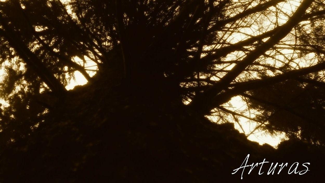 Tree Art The Dark Forest Wood Dark