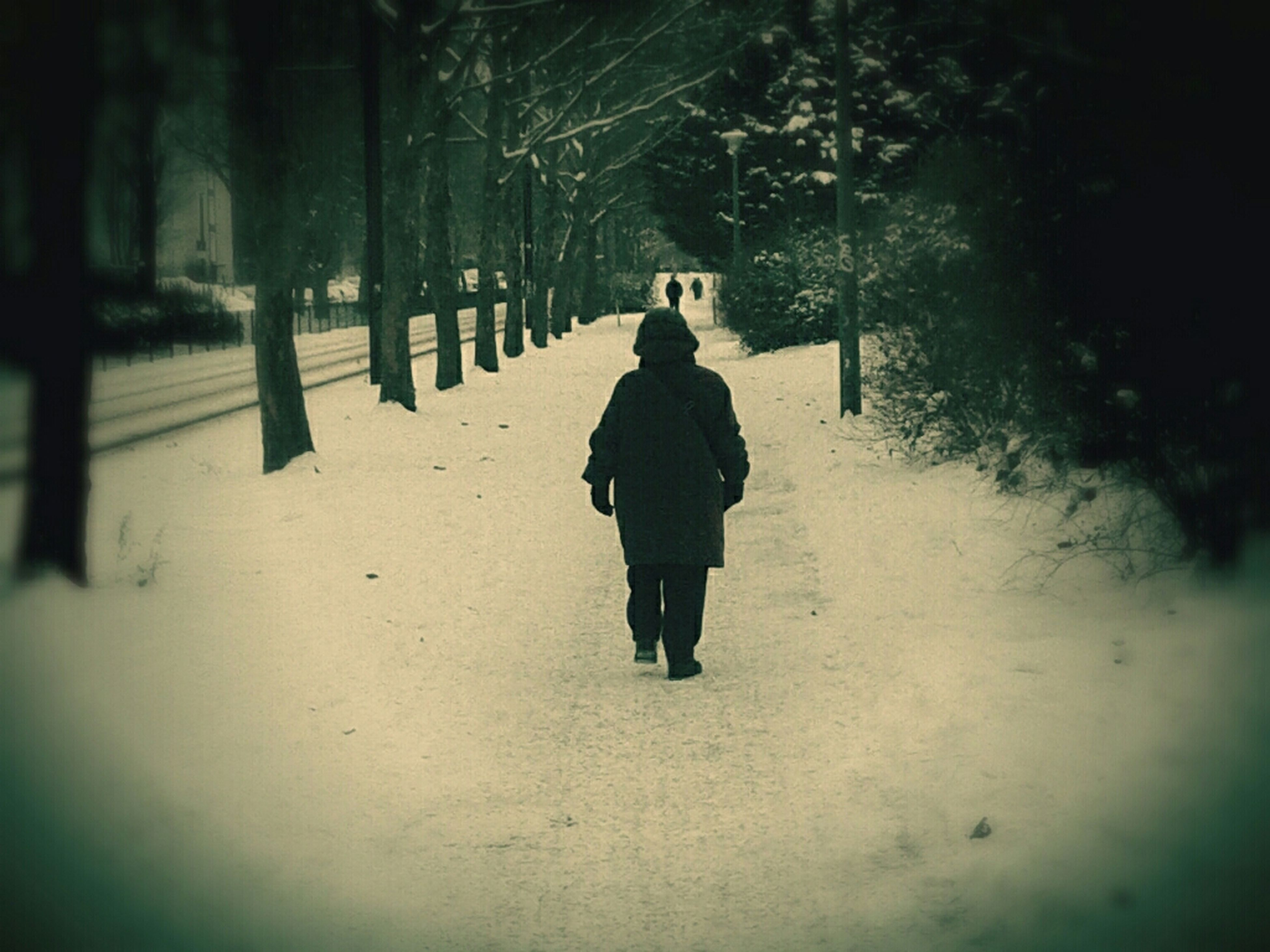 full length, walking, rear view, tree, lifestyles, the way forward, men, leisure activity, street, season, winter, footpath, road, outdoors, day, standing, snow, warm clothing