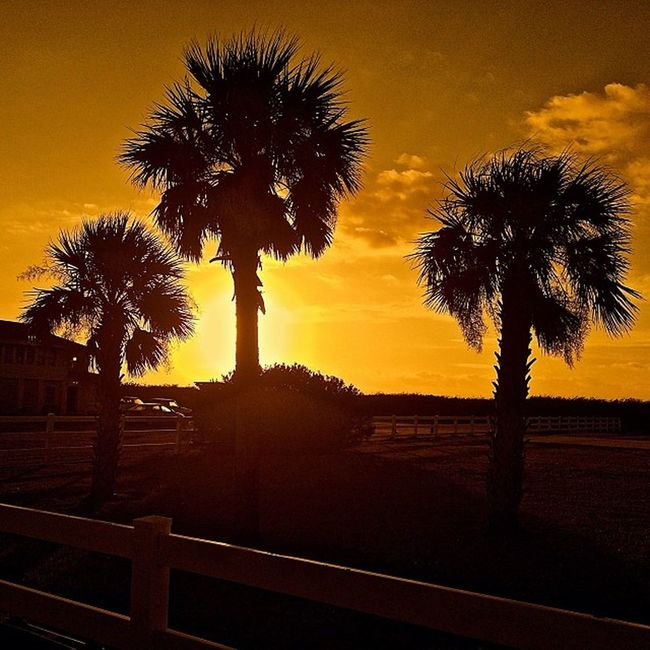 Sunset Nature Sunrise Trees Palm Outdoors Yellow Palms Louisiana Palmtrees Igers Instagood Cumulus Grandisle Rsa_nature Rsa_sky Gulfcoast TheSouthernCollective Deepsouth Trb_sunsets_fx Sunkissed_photos Onlylouisiana Louisianatravel Cumulusclouds Fiftyshades_sd Rebels_t