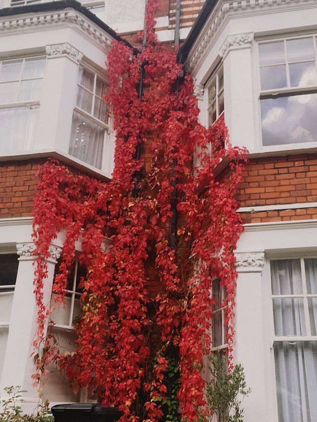 Capturing Motion Building Exterior Architecture Built Structure Red Flower No People Outdoors Low Angle View Tree City Nature Day Fragility London Lifestyle Beauty In Nature Autumn Fall Fall Beauty Autumn Colors