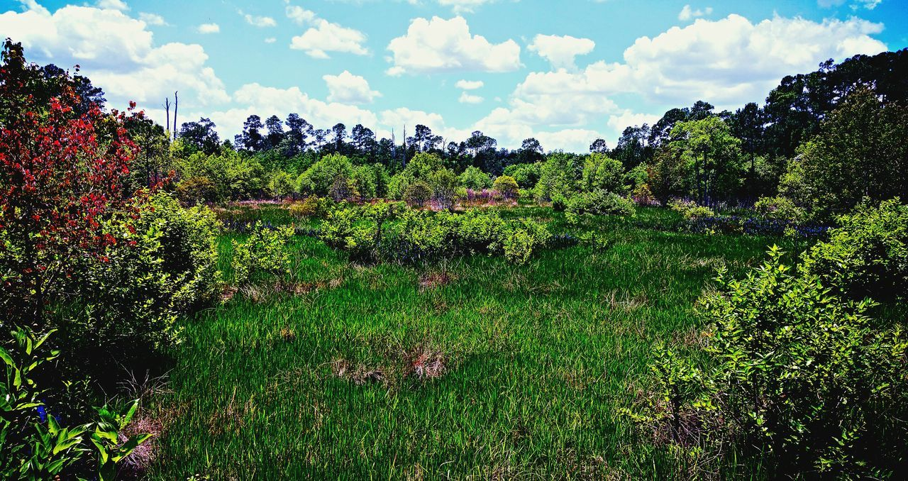 View From The Bridge @ Audubon Park In Deltona, FL EyeEm Nature Lover Nature_collection Natureonyourdoorstep Landscape_Collection Sky And Clouds Naturelovers Landscapes Florida EyeEm Best Shots Getting Inspired