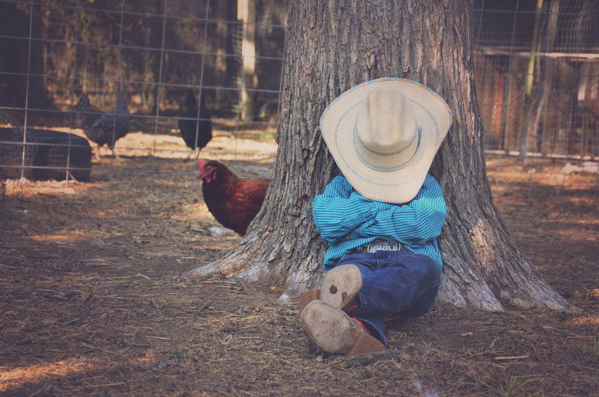 Chicken - Bird Cowboy Farm Farm Life Hen Little Boy Little Cowboy Livestock Outdoors