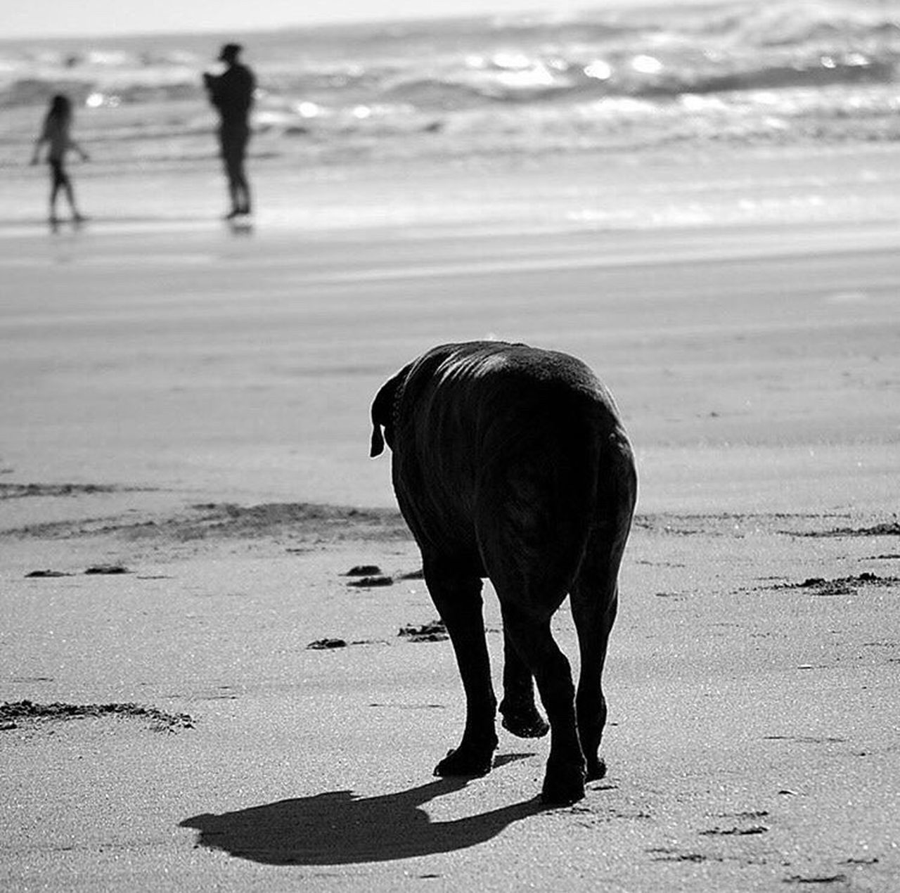 Just keep moving on Dog Beach Beachphotography Beach Life Beach Photography Beachlife Beach Time Beach Walk Beachwalk Sanfrancisco SanFranciscoBay Sanfranciscocalifornia
